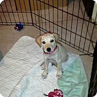 Adopt A Pet :: Ben - Silsbee, TX