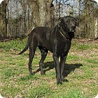 Adopt A Pet :: Ziggy - Washington, DC