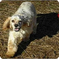 Adopt A Pet :: Zander - Lincolndale, NY