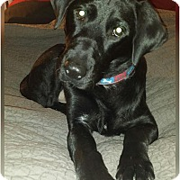 Adopt A Pet :: Tobias - Coppell, TX