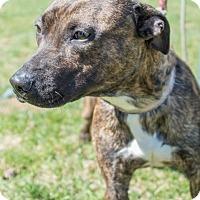 Adopt A Pet :: DOG - Coudersport, PA