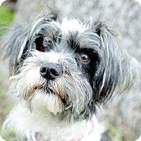 Adopt A Pet :: Sparky - Los Angeles, CA