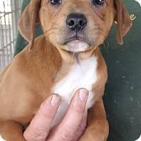 Adopt A Pet :: Frank - Gainesville, FL