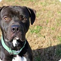 Adopt A Pet :: 1511-0977 Snyder - Virginia Beach, VA