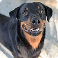 Adopt A Pet :: MOZART - Atlanta, GA