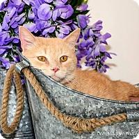 Adopt A Pet :: Mr. Charlie Baker - Garden City, MI