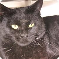 Adopt A Pet :: Bentley - Middletown, CT