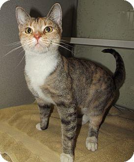 Domestic Shorthair Cat for adoption in Cheboygan, Michigan - Suzie
