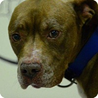 Adopt A Pet :: Otto - Fayetteville, WV