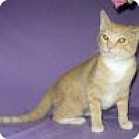 Adopt A Pet :: Chianti - Powell, OH
