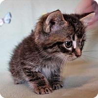 Adopt A Pet :: Emmett - Mackinaw, IL