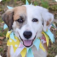 Adopt A Pet :: Ruby - Glastonbury, CT