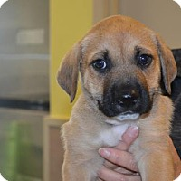 Adopt A Pet :: Hunter - Rockwall, TX