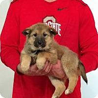 Adopt A Pet :: Trinity - Gahanna, OH
