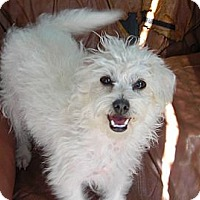 Adopt A Pet :: Marsha - Acton, CA