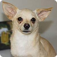 Adopt A Pet :: Pyrate - Tustin, CA