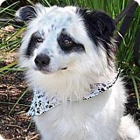 Adopt A Pet :: Bandit - Mission Viejo, CA
