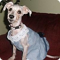 Adopt A Pet :: Nicole - Mooy, AL