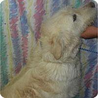 Adopt A Pet :: Beauregard ADOPTED!! - Antioch, IL