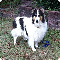 Adopt A Pet :: Pearl - Columbia, SC