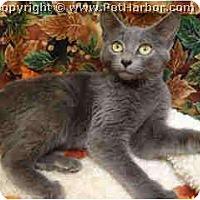 Adopt A Pet :: Lance - Mobile, AL