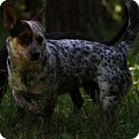 Adopt A Pet :: Athena($200 adoption fee) - Brattleboro, VT