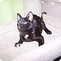 Adopt A Pet :: K-Piper2-Emjae - Colorado Springs, CO