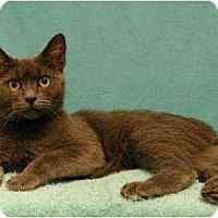 Adopt A Pet :: Nina - Sacramento, CA