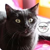 Adopt A Pet :: Aramis - Lyons, NY
