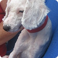 Adopt A Pet :: Jules - Irvine, CA
