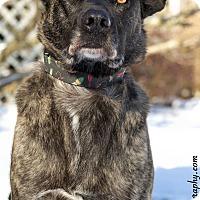 Adopt A Pet :: Jasmine - Worcester, MA