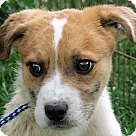 Adopt A Pet :: Darby