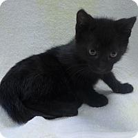 Adopt A Pet :: Maggie - Manning, SC