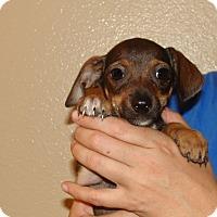 Adopt A Pet :: Zelda - Oviedo, FL