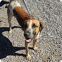 Adopt A Pet :: Arrow - Apache Junction, AZ
