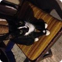 Adopt A Pet :: Freddie - Franklin, WV