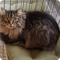 Adopt A Pet :: Joey - Irwin, PA