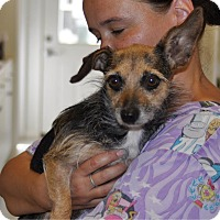Adopt A Pet :: Macaroni (FKA Baby) - Sunrise Beach, MO