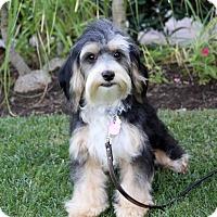 Adopt A Pet :: WAYNE - Newport Beach, CA