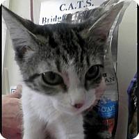 Adopt A Pet :: Minto - Trevose, PA