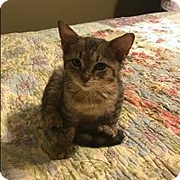 Adopt A Pet :: Frankie RO - Schertz, TX