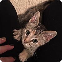 Adopt A Pet :: Nina Lock - Denver, NC