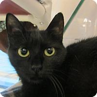 Adopt A Pet :: Saleh - Kingston, WA
