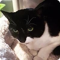 Adopt A Pet :: Gemma - Lafayette, NJ