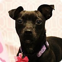 Adopt A Pet :: MONET (video) - Los Angeles, CA