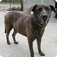 Adopt A Pet :: Key - Key Biscayne, FL