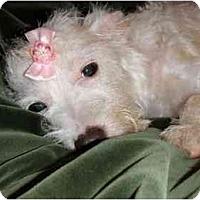Adopt A Pet :: Mercedes - Mooy, AL