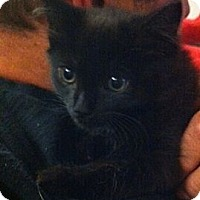 Adopt A Pet :: Patsy - Harriman, NY, NY
