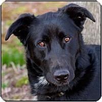 Adopt A Pet :: Jasper - Westfield, NY