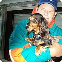 Adopt A Pet :: Porscha - West Bloomfield, MI